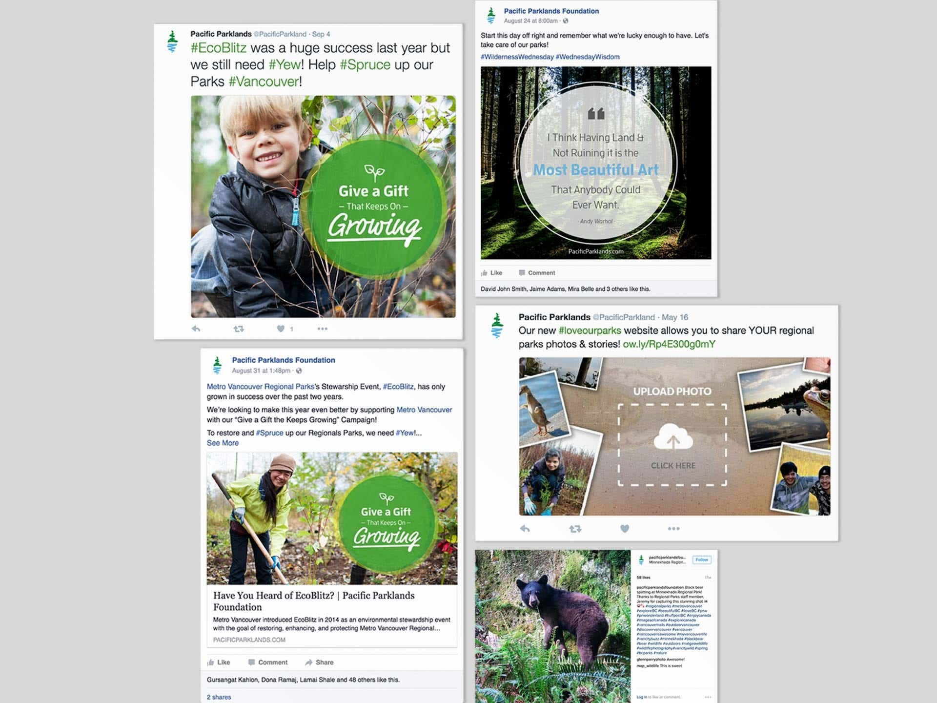Y5 Creative Case Studies Pacific Parklands Social Media Campaign